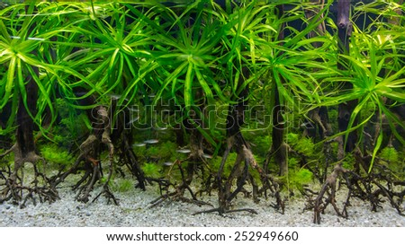 aquarium tank with fish and underwater flora - stock photo