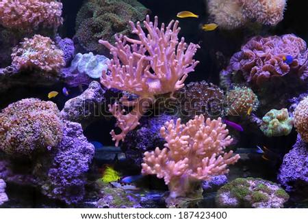 Aquarium with fishes - stock photo