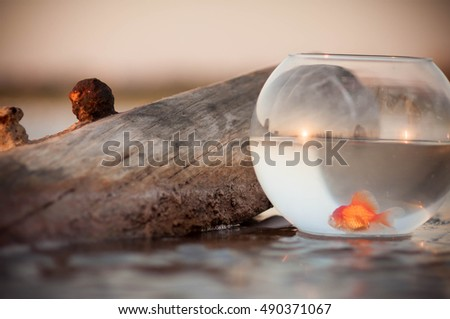 aquarium with goldfish stand on the beach