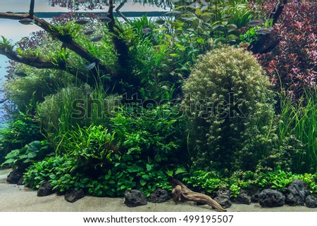 aquarium with water-plant, grass, leafs and animals. background for decoration.