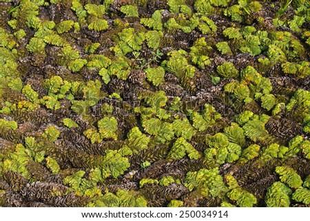Aquatic plants - stock photo
