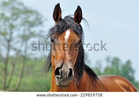 arabian - stock photo