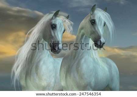 Arabian Brothers - The Arabian horse breed was developed in the deserts of the Arabian Peninsula. - stock photo