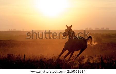 arabian horse silhouette on sunset - stock photo