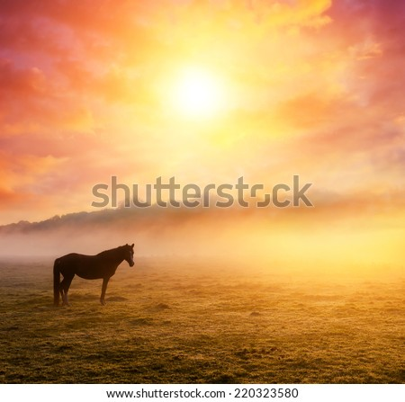 Arabian horses grazing on pasture at sundown in orange sunny beams. Dramatic foggy scene. Carpathians, Ukraine, Europe. Beauty world. - stock photo