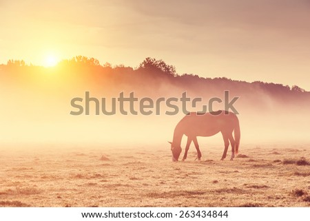 Arabian horses grazing on pasture at sundown in orange sunny beams. Dramatic foggy scene. Carpathians, Ukraine, Europe. Beauty world. Retro style filter. Instagram toning effect. - stock photo