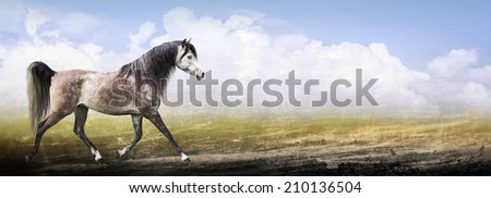 Arabian thoroughbred horse running trot on nature background , banner - stock photo