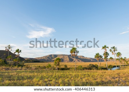 Arabopo valley with some Moriche palm trees (Mauritia flexuosa), in south-eastern Venezuela