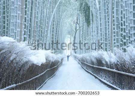 Arashiyama bamboo forest in winter