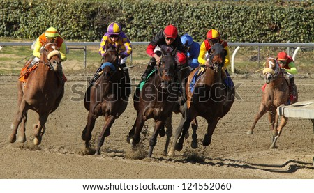 """ARCADIA, CA - JAN 12: The field turns for home in an allowance race at Santa Anita Park on Jan 12, 2013 in Arcadia, CA. Eventual winner is """"Midnight Transfer"""" (far left with orange saddle cloth). - stock photo"""
