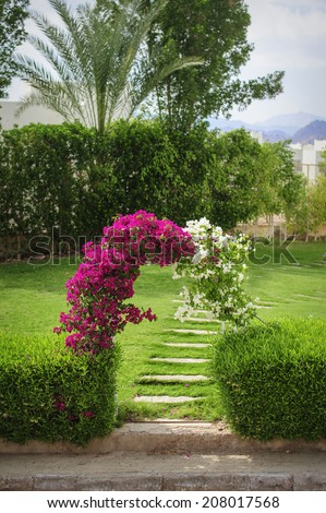 Arch of flowers bougainvillaea on a green glade - stock photo