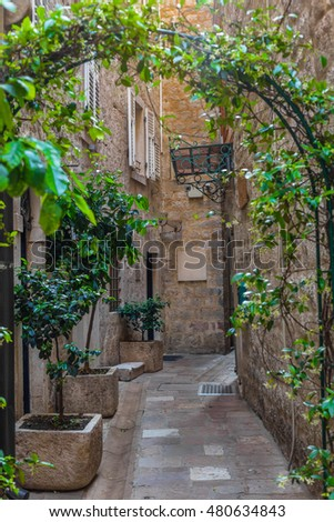 Arch of plants on a dark street. Stone narrow street of the city in the evening. Dark cityscape.