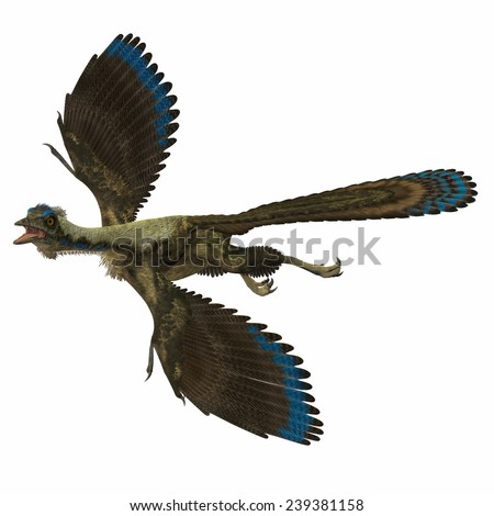 Archaeopteryx over White - Archaeopteryx is the most primitive known bird and lived in the Jurassic Age of Germany. - stock photo