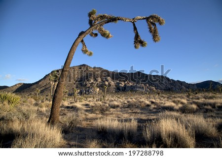 Arched over joshua tree in sky - stock photo