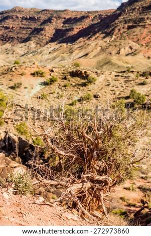 Arches National Park  Moab  Utah  USA - stock photo