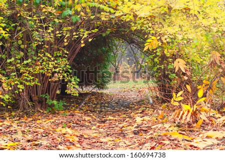 archway of woven autumn shrubs - stock photo