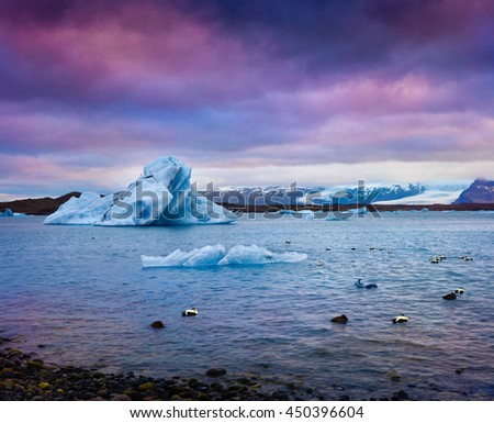 Arctic ducks between blue icebergs in Jokulsarlon glacial lagoon. Colorful sunset in Vatnajokull National Park, southeast Iceland, Europe. Artistic style post processed photo.