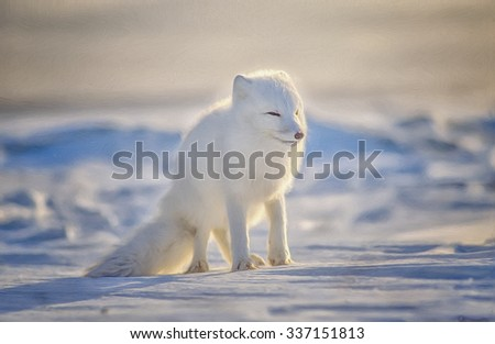 Arctic fox in winter white fur coat standing on Canadian snow,photo art