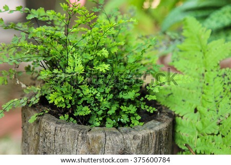 arden decoration/Fern in Tree- stump planter