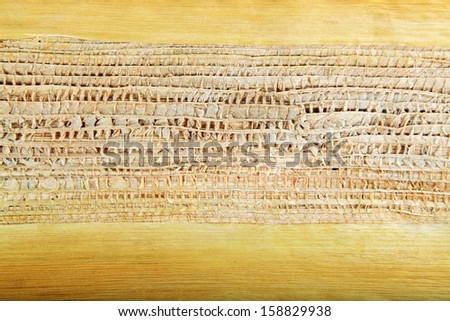 Areca Leaf  texture for background
