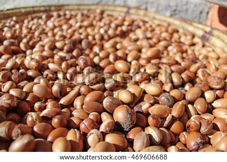 Argan seeds collected by Berber women in the Moroccan countryside.