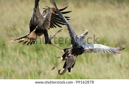 Arial Fight - stock photo