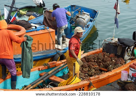 ARICA, CHILE - OCTOBER 12, 2014: Fisherman at Arica in Chile, unloading a catch of Pyura Chilensis, a sea food from the tunicate family found growing in clumps off the coast of Chile and Peru. - stock photo