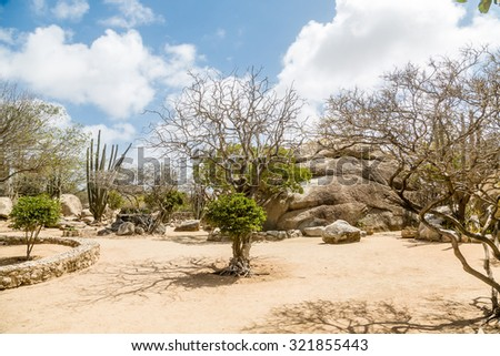 Arid and Dry desert with cactus and native plants