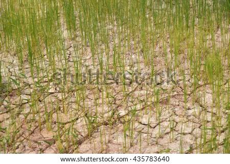 Arid field - stock photo