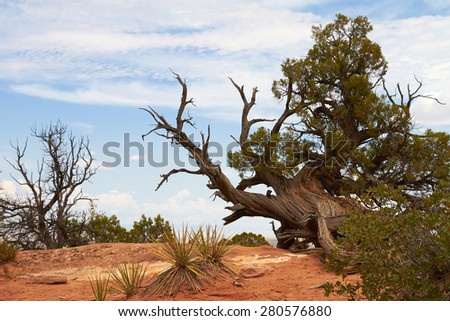 Arid landscape in the Arches national park. Dry tree branches and desert vegetation.