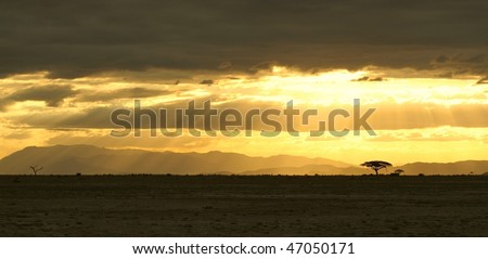 Arid savanna landscape - stock photo