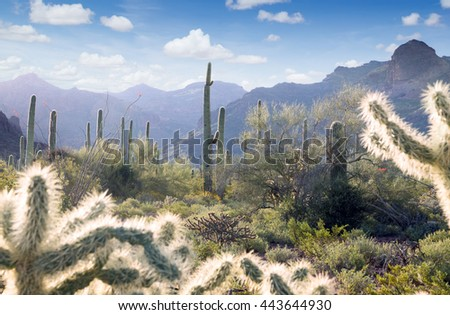 Arizona desert in the early morning.  Organ Pipe Cactus National Monument,  US