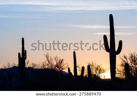 Arizona desert landscape at sunset with saguaro cactus silhouetted - stock photo