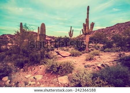Arizona Desert Landscape Oldschool Color Grading. Arizona, United States. - stock photo