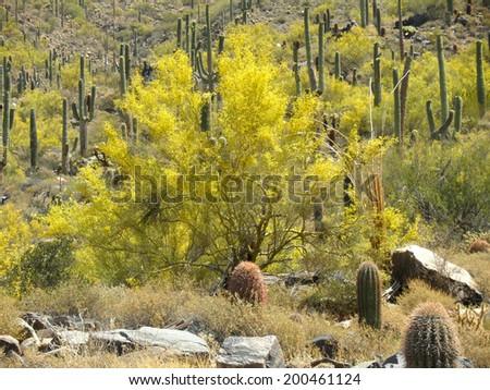 Arizona desert springtime scene - stock photo