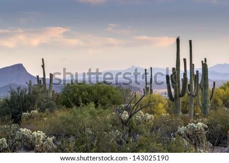 Arizona Desert Sunset in Tucson, Arizona - stock photo