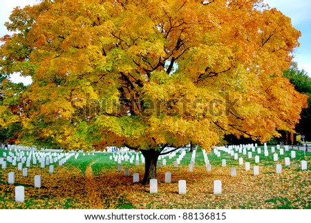 Arlington National Cemetery 7