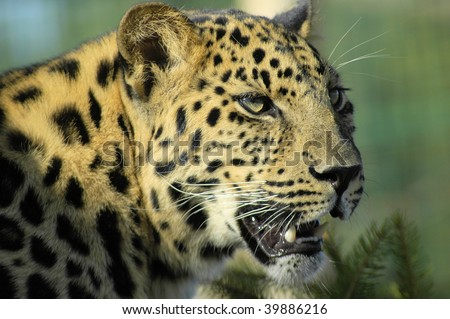 ARMOUR LEOPARD - stock photo