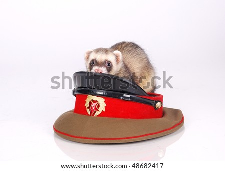 army sable ferret - stock photo