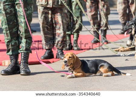 Army Soldier with dog, Training dogs of war - stock photo