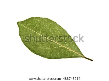 Aromatic dry bay leaf isolated on a white background