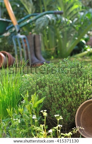 aromatic herbs in front of gardening tools  - stock photo