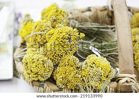 Aromatic lavender yellow, detail of aromatic plants in a market - stock photo