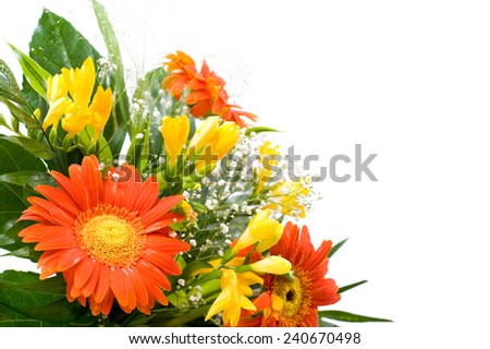 Arranged wedding handheld bouquet detail of freesia and gerbera daisy, posy isolated on white, bright red and yellow cut flowers nosegay. Horizontal orientation, nobody. - stock photo