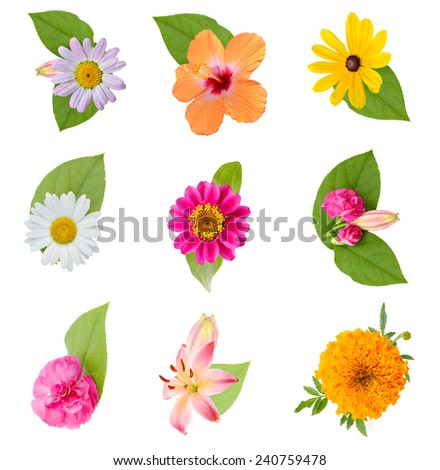 Arrangement from colorful flowers and leaf - stock photo