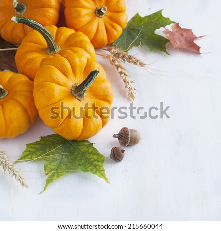 Arrangement from Pumpkin and maple leaves - stock photo