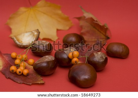arrangement made of leaves, chestnuts and rowan berries