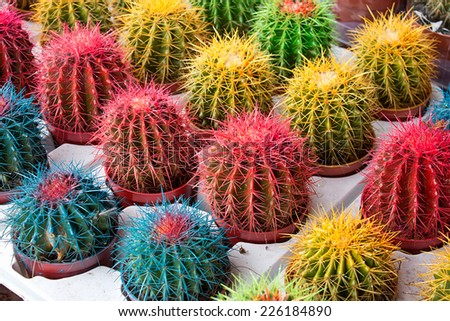 Arrangement of artificially colored cacti at a flower market or nursery the perfect pot plant to match your homes interior color scheme. - stock photo