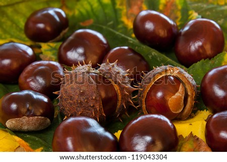 Arrangement of Chestnuts and leaves - stock photo
