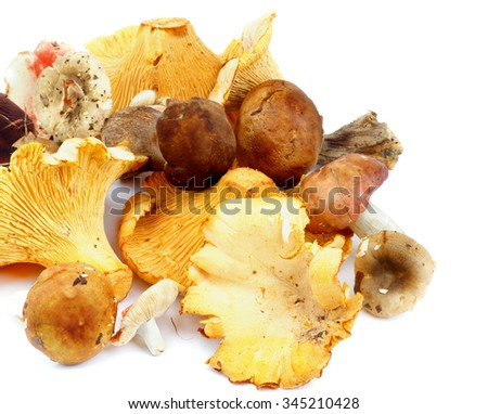 Arrangement of Raw Forest Edible Mushrooms with Golden Chanterelles, Porcini Mushrooms, Boletus and Russules closeup on white background  - stock photo